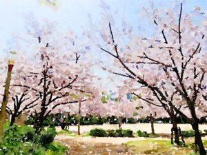 教育現場の春(桜)
